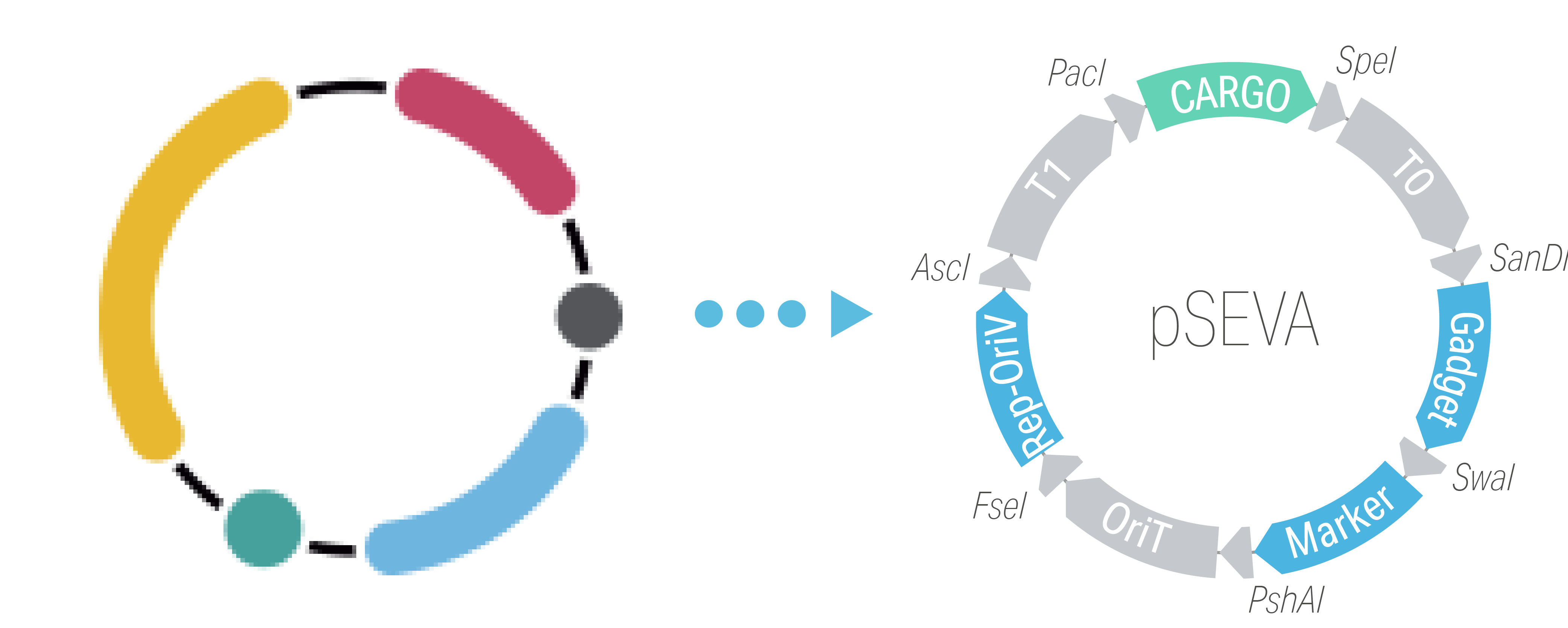 Design a pSEVA vector